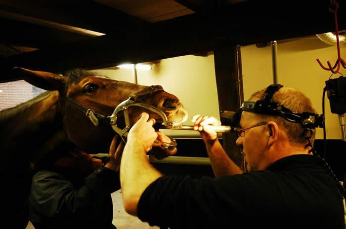 Behandelding paardentandarts