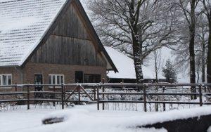 Praktijk Paardentandarts Peter Helthuis
