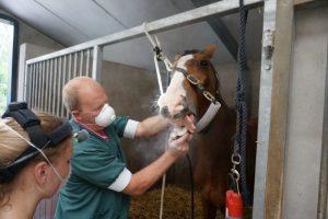 Opleiding tot Paardengebitsverzorger